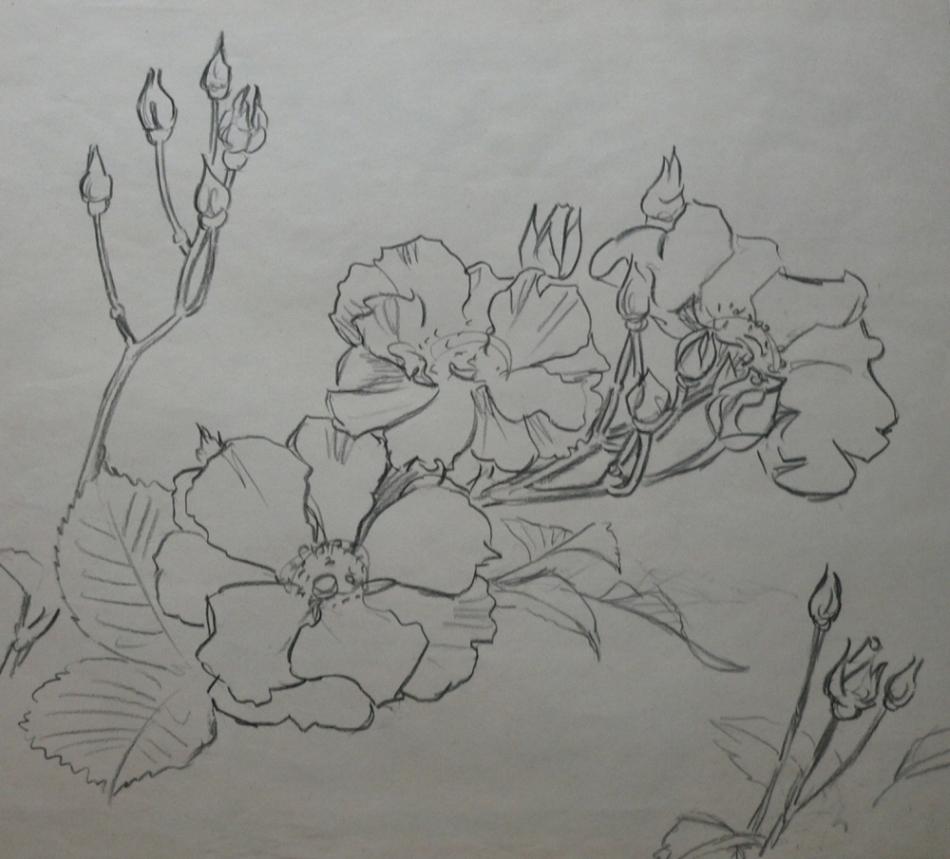 blumen und pflanzen zeichnungen drucke pictures